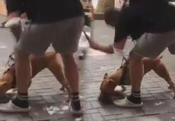 Beşiktaşta pitbull saldırısı Kimse ağzından alamadı