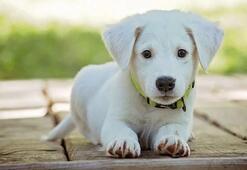 Falda Köpek Görmek Ne Demek Kahve Falında Köpek Şekli Çıkması Ne Anlama Gelir