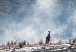 Falda Kanguru Görmek Ne Demek Kahve Falında Kanguru Şekli Çıkması Ne Anlama Gelir