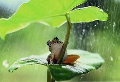 Falda Kurbağa Görmek Ne Demek Kahve Falında Kurbağa Şekli Çıkması Ne Anlama Gelir