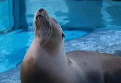 Falda Fok Balığı Görmek Ne Demek Kahve Falında Fok Balığı Şekli Çıkması Ne Anlama Gelir