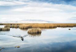 Viki Yeryüzünü Seviyor'da Eber Gölü