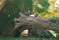 Fırtınanın devirdiği ağaçta keyif