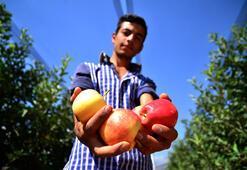 Konyanın elmaları 20 ülkeye ihraç ediliyor