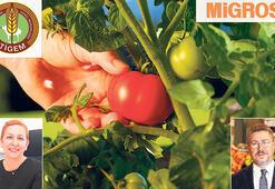 Yerel tohumlar yeniden rafta