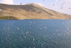 Türkiye Akarsular Ve Göller Haritası: Türkiyede Olan Barajlar, Göller Ve Akarsular Nelerdir