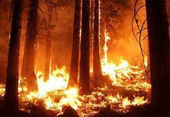 Türkiye Orman Yangınları Afet Haritası: En Çok Orman Yangını Hangi Bölgede (İlde) Görülür