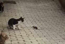 4 kediye kafa tutan fare