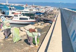 Balıkçı barınağı çöplerden arındı