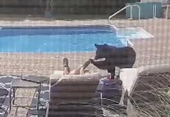 Havuza giren ayı uyuya kalan ev sahibini korkuttu