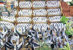 Tezgâh balık dolu palamut 1 numara