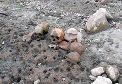 Çanakkalede 4 kafatası ve kemikler bulundu