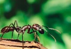 Falda Karınca Görmek Ne Demek Kahve Falında Karınca Şekli Çıkması Ne Anlama Gelir
