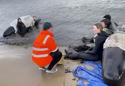 Sığ sularda mahsur kalan balinalardan 70'i kurtarıldı