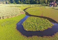 Efteni Gölü Düzce İlinde Nerede Gölün Özellikleri, Oluşumu Ve Tarihçesi
