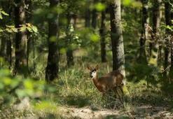 Ormanya Tabiat Parkı Kocaeli İlinde Nerede, Nasıl Gidilir Giriş Ücreti Ve Adres Bilgileri