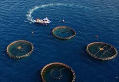 Türkiye su ürünleri ihracatından 8 ayda 632 milyon dolar kazandı