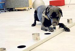 Dedektör köpekler işbaşında