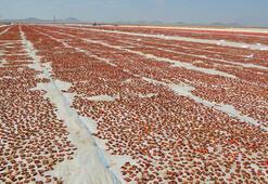 Ereğliden 41 milyon liralık domates kurusu ihracatı