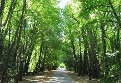Marmaris Milli Parkı Muğla İlinde Nerededir, Nasıl Gidilir Giriş Ücreti Ve Özellikleri