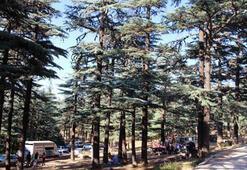 Kızıldağ Milli Parkı Isparta İlinde Nerededir, Nasıl Gidilir Giriş Ücreti Ve Özellikleri