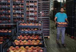 Doğu Karadenizden Rusyaya şeftali ihracatı yüzde 60 arttı
