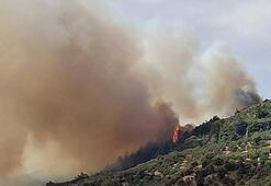 Bursada arıları tütsülerken ormanı yaktı