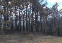 İzmir'deki orman yangını sonrası ağır bilanço