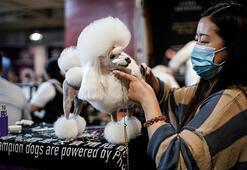 Virüsün doğduğu Wuhan'da köpek güzellik yarışması