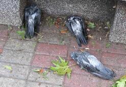 Kadıköyde dolu kuşların ölmesine neden oldu