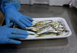 Malatyadan 11 ülkeye balık ihracatı