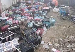 Çinde 5 bin hayvan depoda ölü olarak bulundu