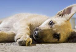 Sokak hayvanları nelerle karşılaşıyor Hayvan haklarının önemi nedir