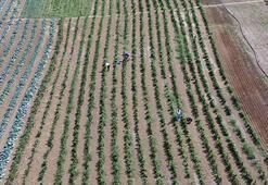 İstanbullular tarlalara akın ediyor