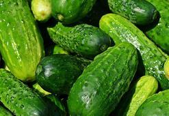 Salatalık Besin Değeri Nedir, Kaç Kalori İçerir İçerisinde Bulunan Vitaminler Nelerdir