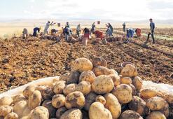 'Patateste üretim çok, yeni pazar bulunmalı'