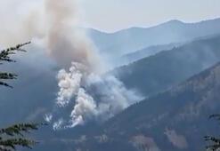 Adana Fekede orman yangını