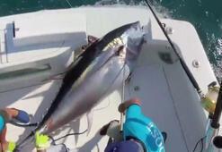 37 kilogram güce dayanacak misina ile 260 kilogramlık balık yakaladı