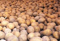 Patates üretim merkezi Niğdede verim ve kalite üreticiyi memnun etti