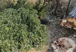 Elazığda üzerine ağaç devrilen kadın öldü