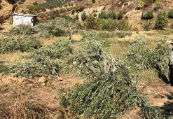 Bahçesindeki 54 ağacı kesilip, kulübesine zarar verildi