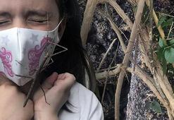 Hayalet böcek dal görenleri şaşırtıyor