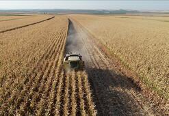 Tarım ÜFE eylülde yükseldi