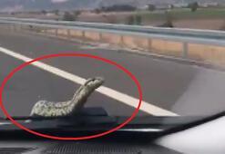 Son dakika haberi: Trafikte şoke eden an Yılan kaputtan böyle çıktı...