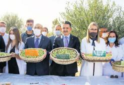 Dünya zeytini koleksiyonda