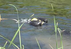 Balık tutmak için köprüye çıkmıştı... Sonrası korkunç
