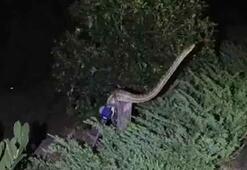 Ezilmekten kurtardığı 3 metrelik piton saldırdı