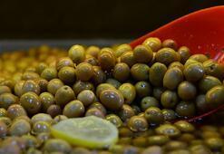 Zeytin üreticisine Erken hasat için acele etmeyin uyarısı