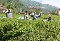 ÇAYKUR, 2020 yılı yaş çay sezonunu kapattı