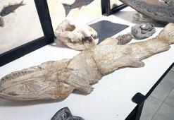 Oktar'ın evlerinde 879 'kaçak' fosil